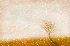 The abstract nature background Stock Image