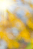 Abstract nature background. Natural blurred background.Element of design stock image