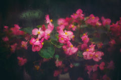 Abstract Nature Background with Pink Flowers stock images