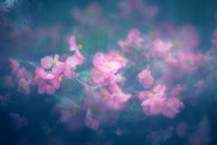 Abstract Nature Background with Pink Flowers Royalty Free Stock Photos