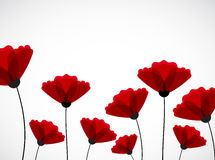 Abstract nature background. Red poppy flowers. Vector Royalty Free Stock Photos