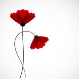 Abstract nature background. Red poppy flowers. Royalty Free Stock Photography