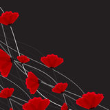 Abstract nature background. Red poppy flowers. Royalty Free Stock Images