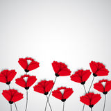 Abstract nature background. Red poppy flowers. Stock Photos