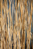 Abstract nature background: reed Stock Image