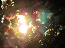 Abstract nature background, sunlight and flare through leaves. Stock Photography