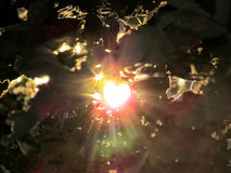 Abstract nature background, sunlight and flare through leaves Stock Images