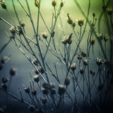 Abstract nature background with wild flowers and plants Stock Photos