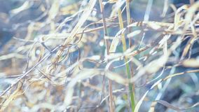 Free Abstract Nature Background With Blur And Grass, Snow And Sun. Stock Images - 103170404