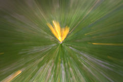 Abstract nature background zoom Royalty Free Stock Photos