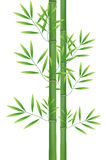 Abstract nature bamboo Royalty Free Stock Image
