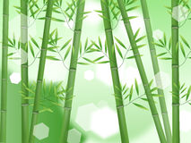 Abstract nature bamboo Stock Images