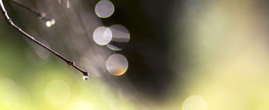 Abstract nature banner Royalty Free Stock Image