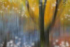 Abstract nature blurred background Stock Photography