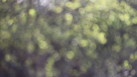 Abstract nature blurred background of trees stock video footage