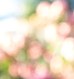 Abstract nature bokeh background Royalty Free Stock Image