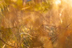 Abstract nature bokeh background Royalty Free Stock Images