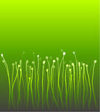 Abstract nature curly gradient grass over green Stock Photos