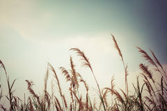 Abstract nature grass field and sky background Royalty Free Stock Photos
