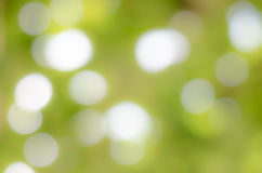 Abstract nature green blurred Stock Photo