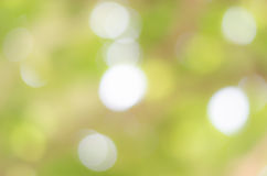 Abstract nature green blurred background Royalty Free Stock Images