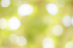 Abstract nature green blurred background Stock Images