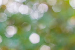 Abstract nature green blurred background with bokeh, green bokeh background. Stock Images