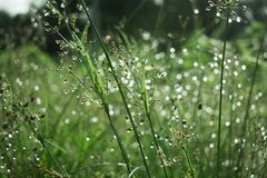 Abstract nature, green kind of grass, some in sharpness, rest in stock photography
