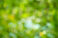 Abstract nature green and yellow background. royalty free stock images