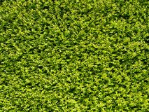 Abstract Nature Hedge Background Stock Photography