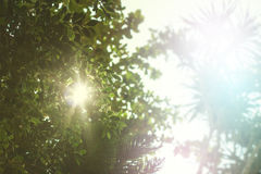 Abstract nature landscape with sunlight stock images