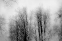 Motion blur trees a gray november day stock photos