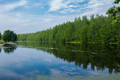 Village pond nature Royalty Free Stock Photography