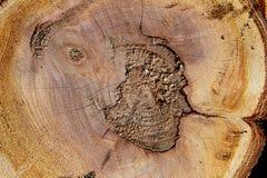 Abstract natuurlijk backgroundof houten hout Stock Foto's