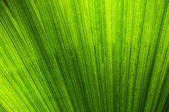 Abstract natuurlijk die patroon door palmblad wordt gecreeerd Stock Afbeeldingen