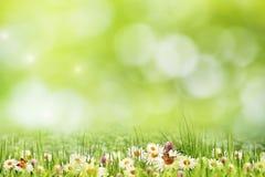 Abstract natuurlijk landschap met de bloemen van het schoonheidsmadeliefje Royalty-vrije Stock Afbeelding