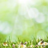 Abstract natuurlijk landschap met de bloemen van het schoonheidsmadeliefje Royalty-vrije Stock Foto