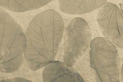 Abstract natuurlijk textuurconcept Stock Foto