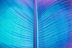 Abstract neon colored plant royalty free stock photography