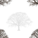 Abstract Oak Design Stock Photography