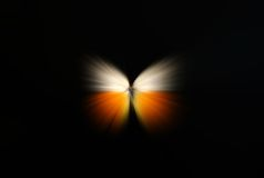 Abstract Of A Butterfly With Zoom Royalty Free Stock Image