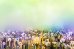 Abstract oil painting white flowers field in soft color. Oil paintings white dandelion flower in the meadows. Spring floral seasonal nature with blue -green in Royalty Free Stock Photography