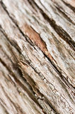 Abstract old tree bark texture Royalty Free Stock Image
