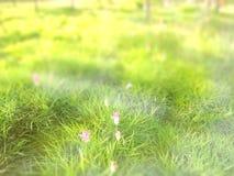 Abstract onduidelijk beeld: de lentegras en roze bloem met groene aard B Royalty-vrije Stock Foto