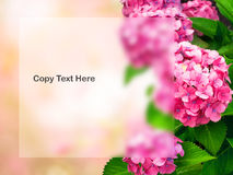 Abstract onduidelijk beeld en de zachte zoete roze achtergrond van de kersenbloesem Royalty-vrije Stock Afbeeldingen