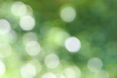 Abstract onduidelijk beeld met bokhe van licht door de bomenstemming Stock Afbeelding