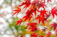 Abstract onduidelijk beeld rood blad op de de herfsttijd Stock Foto