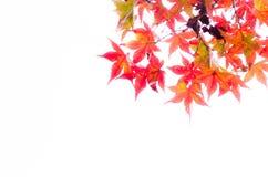 Abstract onduidelijk beeld rood blad op de de herfsttijd Royalty-vrije Stock Foto