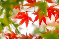 Abstract onduidelijk beeld rood blad op de de herfsttijd Royalty-vrije Stock Afbeelding