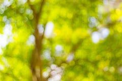 Abstract onduidelijk beeld van de bomen Royalty-vrije Stock Afbeeldingen